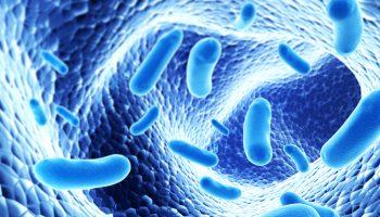 Colony of pathogen bacterias – 3d render