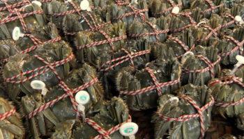 hairy-crabs